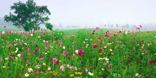 flores-silvestres-menorca